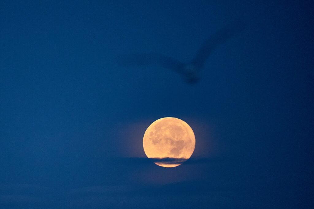 apuus de luna plina Delta Dunarii