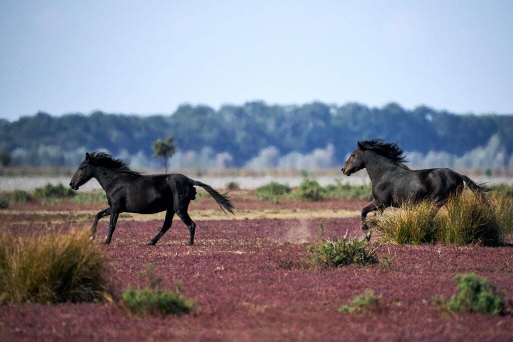 alearga caiii de la Letea