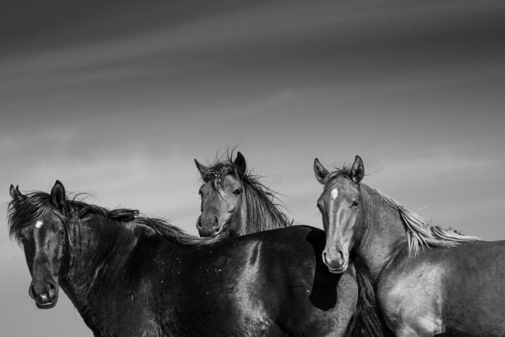 trei cai la Letea